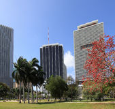 Miami da baixa - 4 Fotografia de Stock Royalty Free