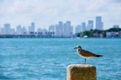 Miami downtown foggy skyline Miami Beach Stock Photo