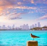 Miami downtown foggy skyline Miami Beach Royalty Free Stock Images
