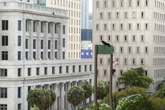 Miami Downtown Skyscrapers Royalty Free Stock Photos