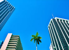 Miami Downtown skyscrapers Stock Images