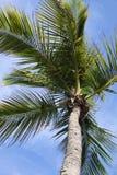 miami drzewko palmowe Obrazy Royalty Free