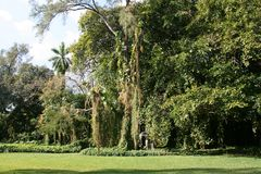 Miami Florida Lizenzfreies Stockfoto