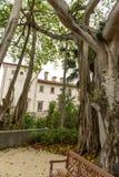MIAMI, FLORIDA - APRIL 29, 2015: Vizcaya Museum  Garden. Tall Tree and Bench. Royalty Free Stock Photos