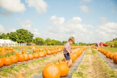 Miami, Florida - October 17, 2018: Boy plays in pupkin patch in Burr`s Berry Farm in Homestead