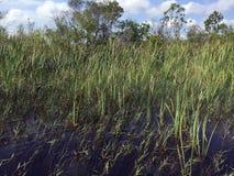 Miami  Florida Stock Photos
