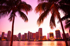 Miami Florida. Skyline and bay at sunset through two palm trees royalty free stock photography