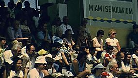 Miami seal show. Miami, Florida, United States - Circa 1979: seal show at Seaquarium of Miami in 70`s with animal trainer. The historical United States of stock footage