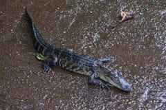Miami, Florida, USA - Everglades Alligator Farm. Impressions of my daytrip to Everglades Alligator Farm, Florida, USA Stock Photos
