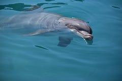Miami, Florida - USA - January 08, 2016: Flipper Dolphin Stock Image