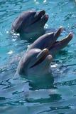Miami, Floryda Styczeń 08, 2017: - usa - Delfiny przy Floryda Obrazy Stock