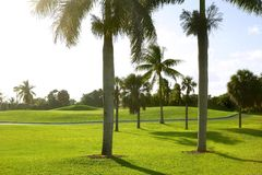 Miami Key Biscayne Golf tropical field. Miami Key Biscayne Golf tropical green grass field palm trees royalty free stock image
