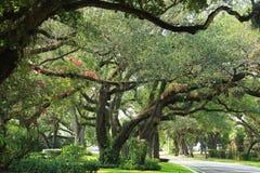 Miami - Koralowi szczyty zdjęcie royalty free
