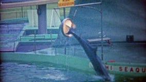 MIAMI, LA FLORIDE 1962 : Le joint de Miami Seaquarium équilibre la boule, dauphin saute par des cercles banque de vidéos