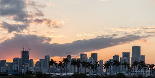 Miami-Landschaftssonnenuntergang-Palmen Stockfotos