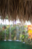 Miami life. This is an abstract image detailing a tiki hut with palm trees and tropical plants in the background in Miami Florida at a wedding stock image