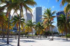 Miami linii horyzontu W centrum widok od Bayfront parka Zdjęcie Royalty Free