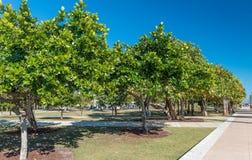 MIAMI, LUTY - 25, 2016: Południowy Pointe park na pięknym wint Zdjęcia Royalty Free