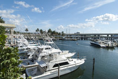 Miami Marina Yachts Royalty-vrije Stock Afbeelding