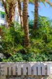 Miami och palmträdmaterielfoto Fotografering för Bildbyråer