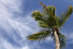 Miami Palm Tree (wide) Stock Photos