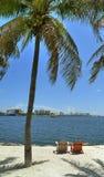 Miami palm trees Stock Photos
