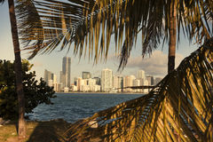 Miami between palm trees Stock Photo