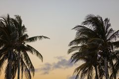 Miami palm trees at dusk Stock Photo