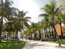 Miami palm trees royalty free stock images