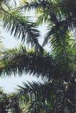 Miami palmträd Arkivbild