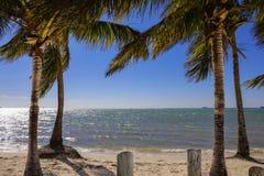 Miami palmträd på den Key Biscayne sikten av fjärden Royaltyfri Foto