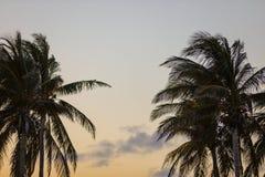 Miami palmträd på skymning Arkivfoto