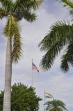 Miami plaża, august 9th: Wiecznozieloni drzewka palmowe w Miami plaży od Floryda usa Zdjęcia Royalty Free