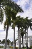 Miami plaża, august 9th: Wiecznozieloni drzewka palmowe w Miami plaży od Floryda usa Zdjęcie Stock