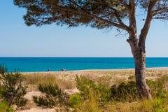MIAMI PLATJA, SPANIEN - 24. APRIL 2017: Setzen Sie Landschaft einer Kiefer in dem Meer auf den Strand Kopieren Sie Raum für Text Lizenzfreie Stockbilder