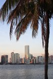 Miami Skyline Stock Image