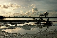 Miami Skyline Framed by Mangrove and Tide Pool Stock Photos
