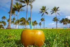 Miami South Beach 2 straws coconut Florida Stock Image