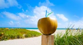 Miami South Beach 2 straws coconut Florida Royalty Free Stock Images