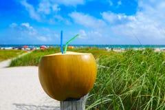 Miami South Beach 2 straws coconut Florida Stock Photography