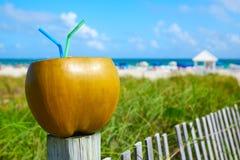 Miami South Beach 2 straws coconut Florida Stock Images