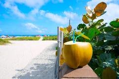 Miami South Beach 2 straws coconut Florida Royalty Free Stock Photos