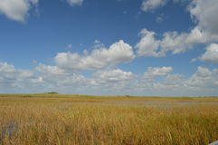 Miami-Sumpfgebiete Stockbild