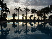 Palm trees reflecting on swimming pool Royalty Free Stock Photos