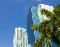 Miami USA Det tropiska landskapet med gömma i handflatan och skyskrapor Arkivfoto