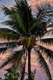 Miami Vice Arkivfoton