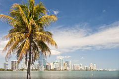 Miami waterfront and palm tree Stock Photo