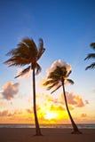 Miami Wyrzucać na brzeg, Floryda lata kolorowy wschód słońca, lub zmierzch z drzewkami palmowymi Zdjęcia Stock