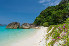 Miang Island And Pohuehue Plant Thailand Royalty Free Stock Photos