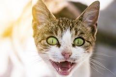 Miar bonito do retrato de Cat With Green Eyes Closeup da rua imagens de stock